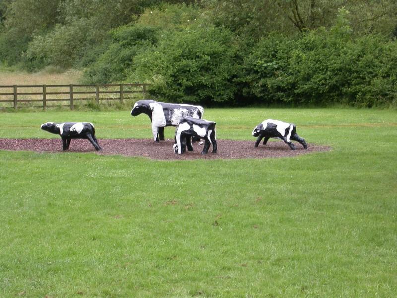 Bancroft Cows_05072014_01