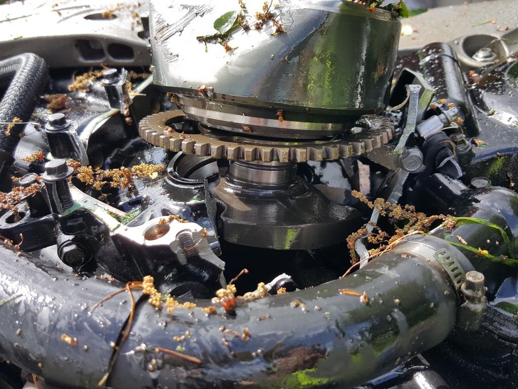 Whoops Windsor S Honda X11 Rigsville